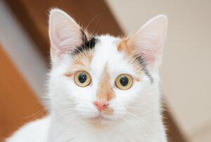cat photo