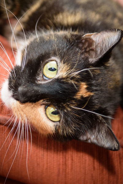 Cat photo Bucks photographer